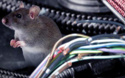 Cara Usir Tikus Yang Bersarang di Mesin Mobil